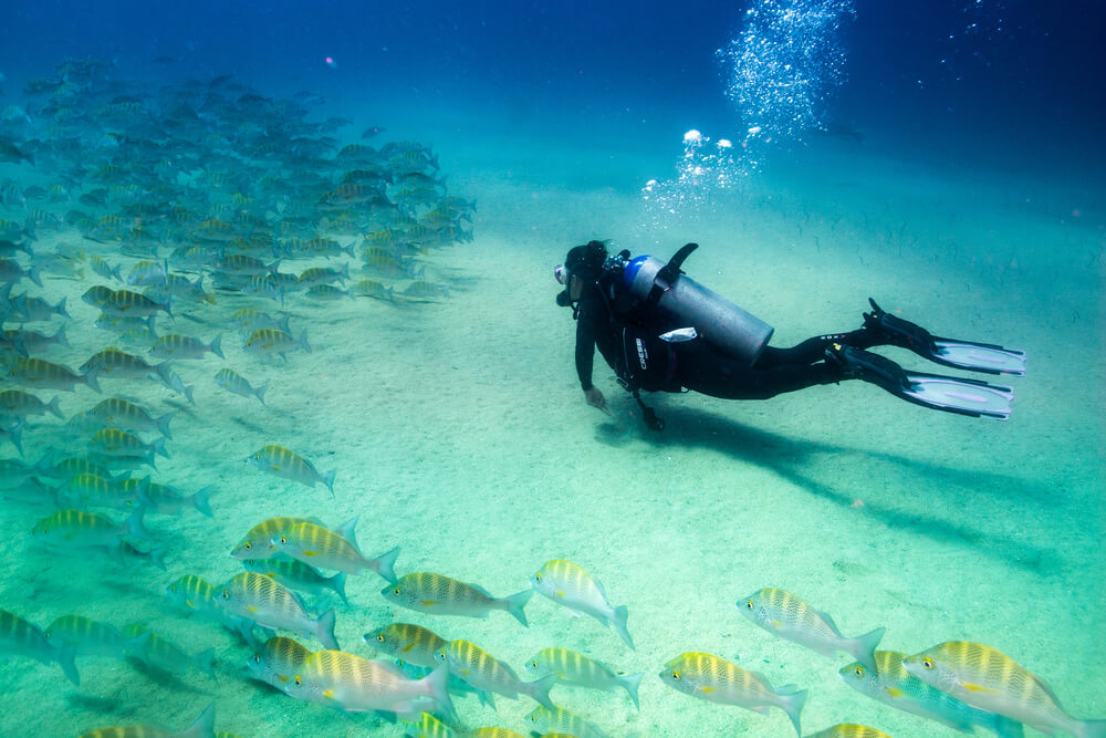 Top Sights to See: A Cozumel Dive